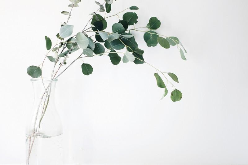 feuilles d'eucalyptus placées dans un vase transparent